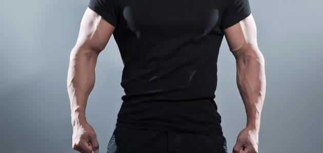 طريقة تكبير العضلات