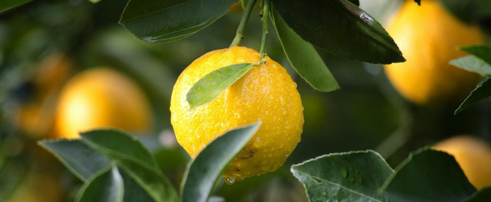 أضرار الليمون للرجال